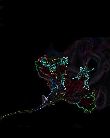 Habiscus Smoke Fantasy