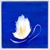 "The Blue Garden, Lily I; 8""x8"" plus white float frame"