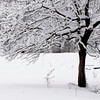 winter_snow_014