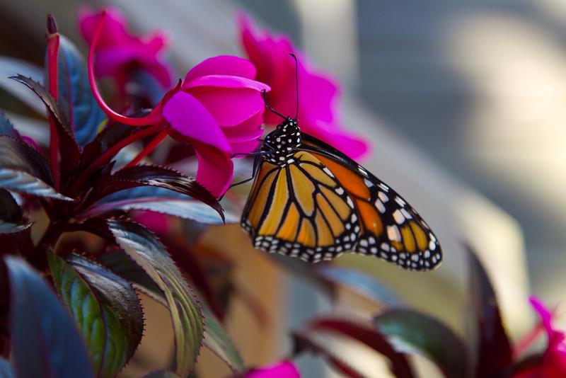 09-25-2011-Butterfly-8621-2
