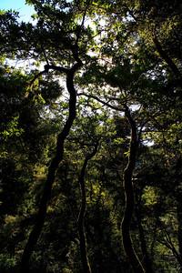 Enchanted woods of Muir 2 of 4