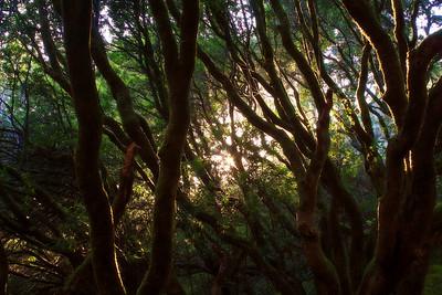 Enchanted woods of Muir 3 of 4