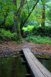 Muir Redwoods 2