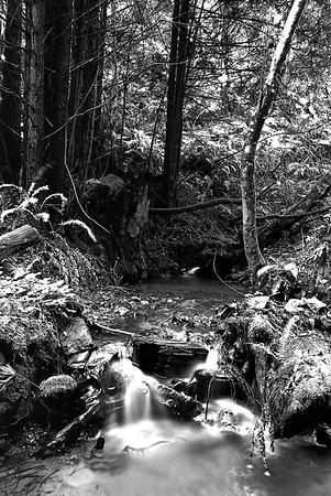 """Purissima Creek and The Zone System By Brett Downen  Float Mounted MetalPrint Available sizes: 4"""" x 6"""", 8"""" x 12"""", 16"""" x 24"""". 24"""" x 36"""""""