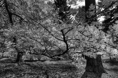 Spring blossoms in Washington Park, Portland, Oregon.