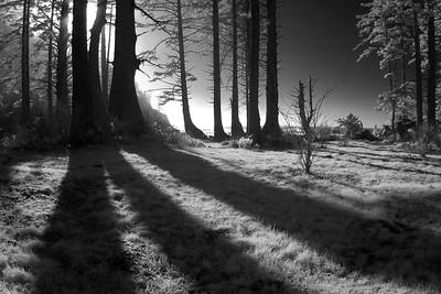 Long Shadows