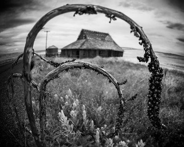 Withered Beauty High Desert, Oregon By Beverly Downen
