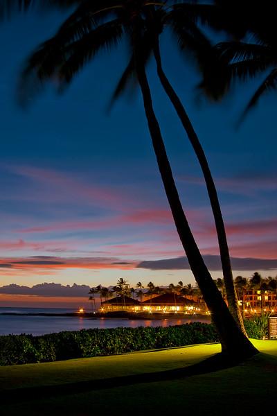 Poipu Beach Palm