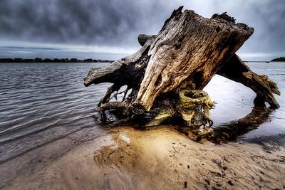 "Low Tide Tree By Brett Downen  Float Mounted MetalPrint Available sizes: 4"" x 6"", 8"" x 12"", 16"" x 24"". 24"" x 36"""