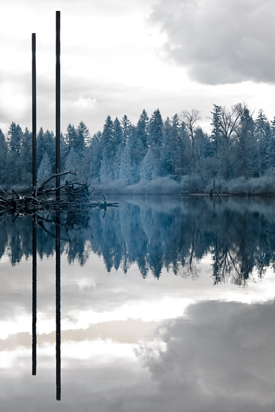 Reflection Study V