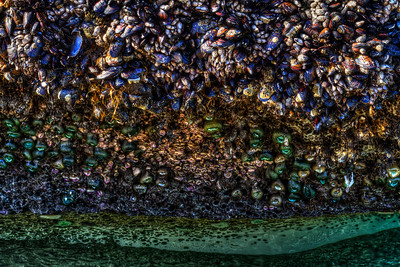 Huge Mussels  by Brett Downen