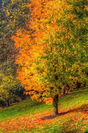 Halfway into Fall. Washington Park, Portland, Oregon