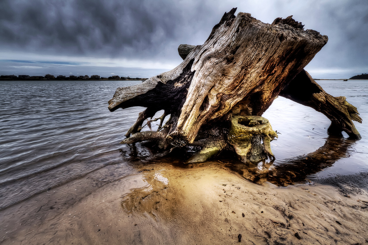 """Low Tide Tree<br /> By Brett Downen<br /> <br /> Float Mounted MetalPrint<br /> Available sizes: 4"""" x 6"""", 8"""" x 12"""", 16"""" x 24"""". 24"""" x 36"""""""