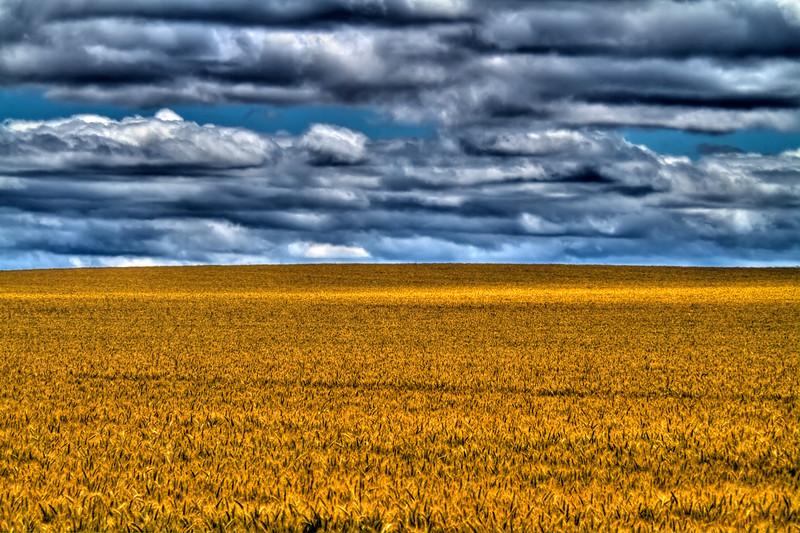 """High Oregon Wheat<br /> By Brett Downen<br /> <br /> Float Mounted MetalPrint<br /> Available sizes: 4"""" x 6"""", 8"""" x 12"""", 16"""" x 24"""". 24"""" x 36"""""""