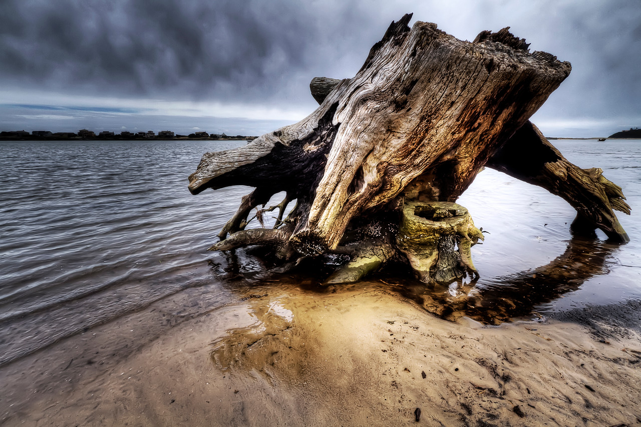 "Stump in the Bay<br /> By Brett Downen<br /> <br /> Float Mounted MetalPrint<br /> Available sizes: 4"" x 6"", 8"" x 12"", 16"" x 24"". 24"" x 36"""