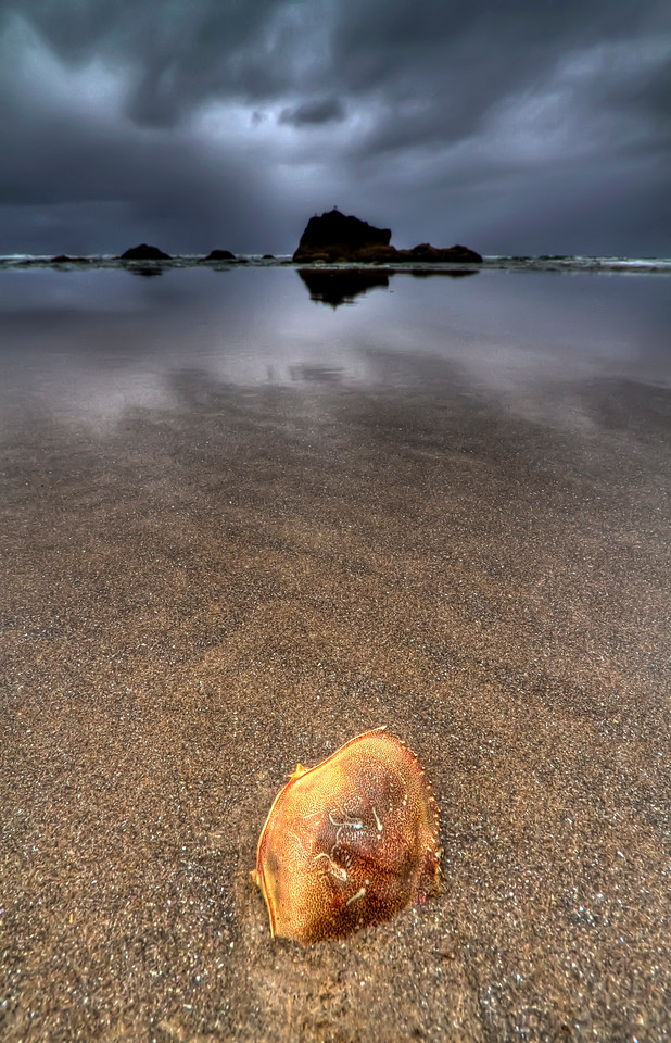 """Shelled Crab<br /> Cannon Beach, Oregon<br /> By Brett Downen<br /> <br /> Printed on archival quality paper<br /> Available in two sizes: 10"""" x 16"""" and 14"""" x 22"""""""