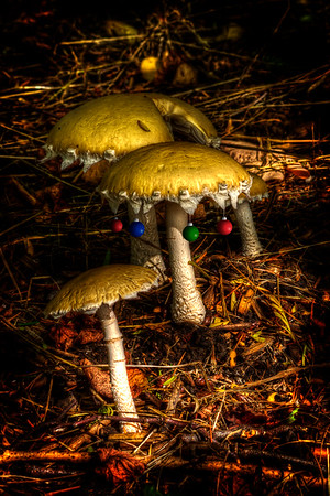 Xmas shrooms  by Brett Downen