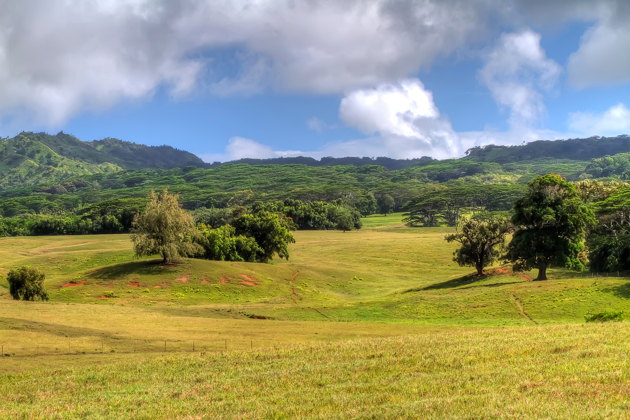 "Jurassic Park Valley<br /> Jurassic Kahili Ranch<br /> Kauai, Hawaii<br /> By Brett Downen<br /> <br /> Float Mounted MetalPrint<br /> Available sizes: 4"" x 6"", 8"" x 12"", 16"" x 24"". 24"" x 36"""