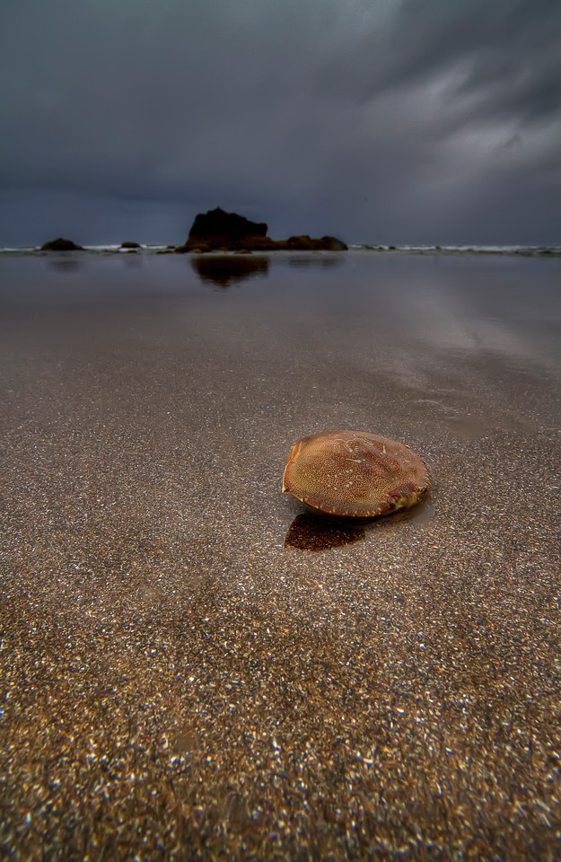 """Shelled Crab #2<br /> Cannon Beach, Oregon<br /> <br /> HDR using Photomatix.<br /> By Brett Downen<br /> <br /> Printed on archival quality paper<br /> Available in two sizes: 10"""" x 16"""" and 14"""" x 22"""""""