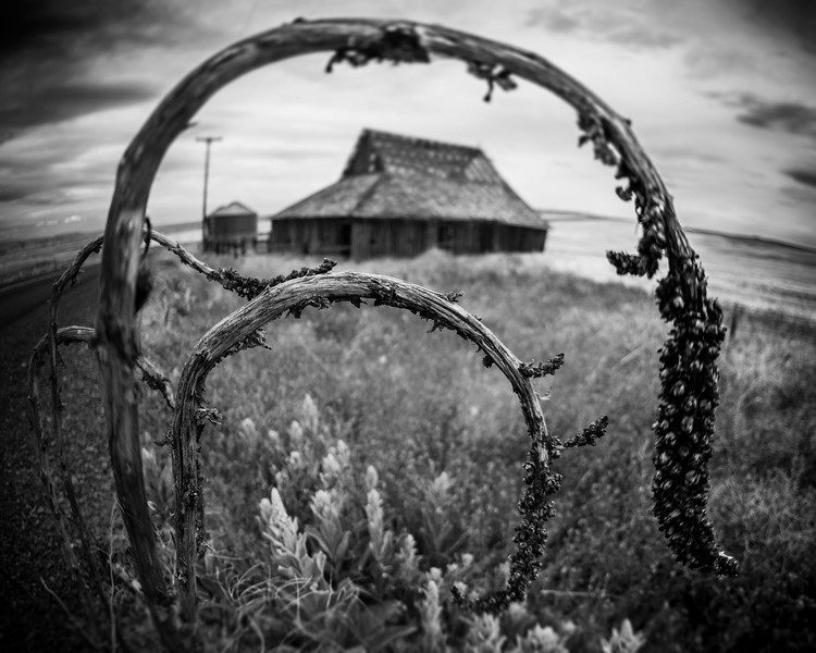 Withered Beauty<br /> High Desert, Oregon<br /> By Beverly Downen