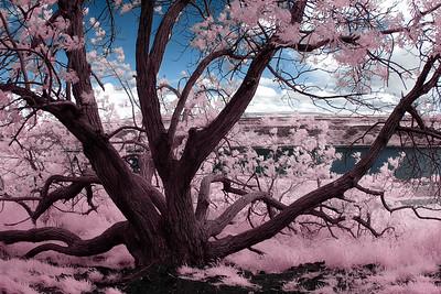 Stonehenge Tree