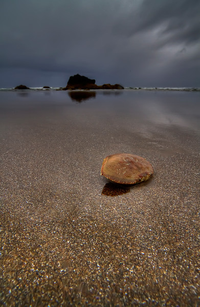 "Shelled Crab #2<br /> Cannon Beach, Oregon<br /> <br /> HDR using Photomatix.<br /> By Brett Downen<br /> <br /> Printed on archival quality paper<br /> Available in two sizes: 10"" x 16"" and 14"" x 22"""