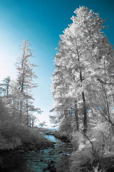 Infrared Creek