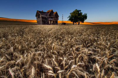 """Abandoned House and Beautiful Wheat By Brett Downen  Float Mounted MetalPrint Available sizes: 4"""" x 6"""", 8"""" x 12"""", 16"""" x 24"""". 24"""" x 36"""""""