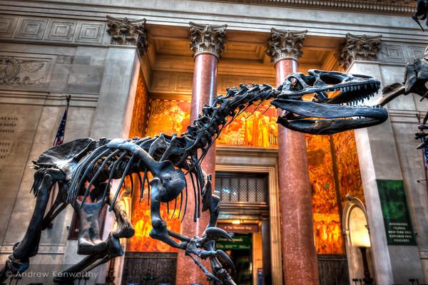American Museum of Natural History NY NY