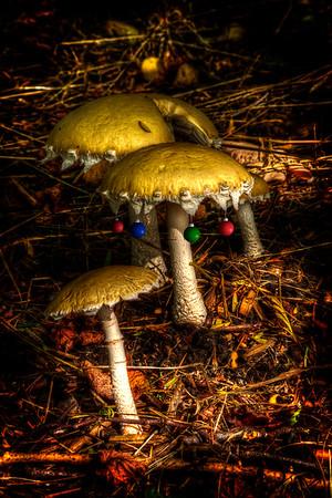 Xmas shrooms  by Brett Downen
