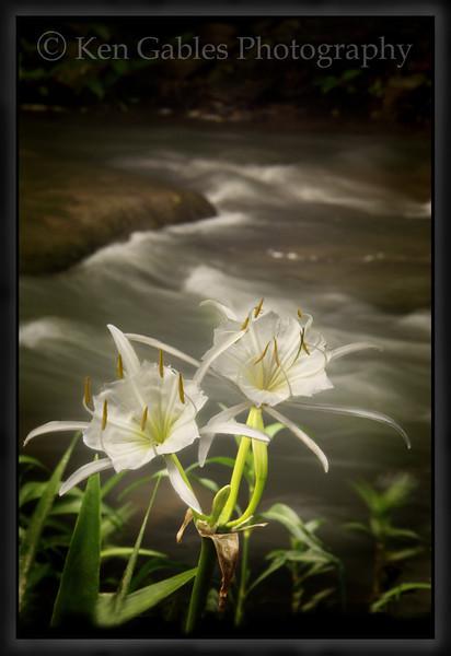 Cahaba Lily Portrait #4, Buck Creek, Shelby County Alabama