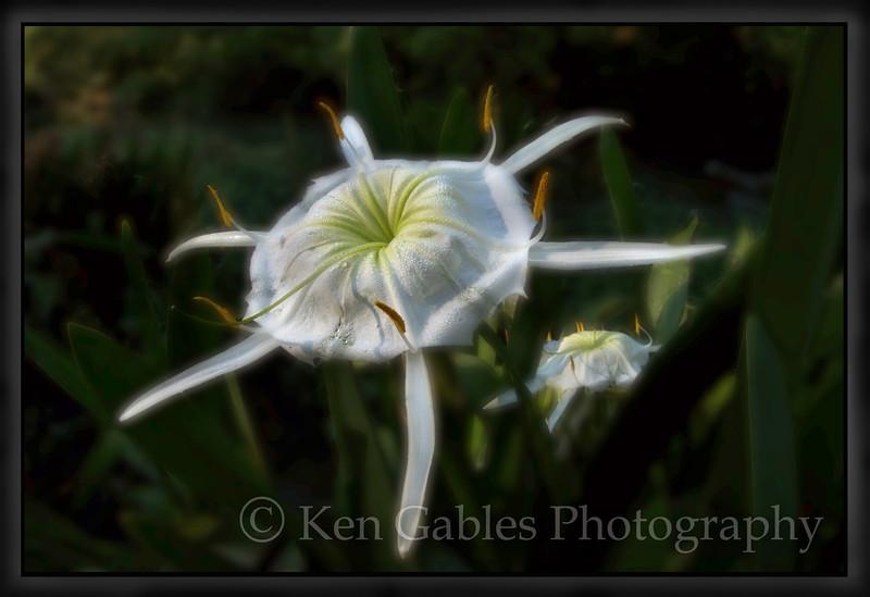 Cahaba Lily Portrait #14, Buck Creek, Shelby County Alabama