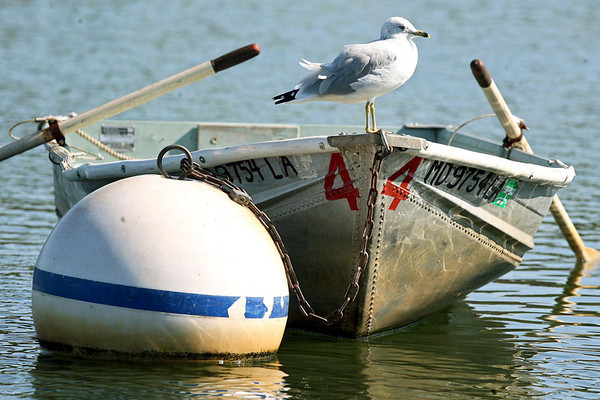 A seagull perches itself on a rowboat tied down to a buoy at  Piney Run Reservoir in Sykesville on Monday, Oct. 15, 2007. Chris Ammann/Examiner