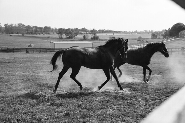 Horse-blacknwhite1