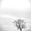 lonely tree -2287