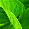 green curves-16x20