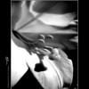 Inner Lilly_poster