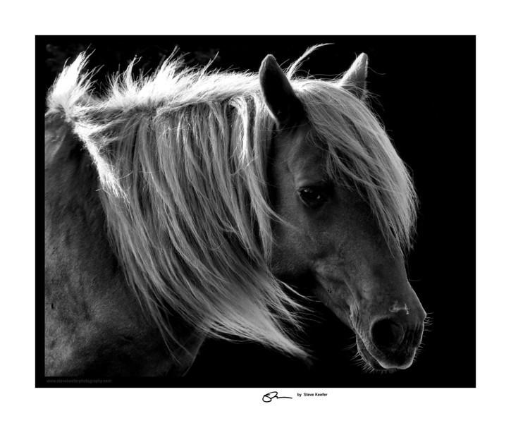 Assateaque Pony