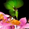 Wonderland Flower