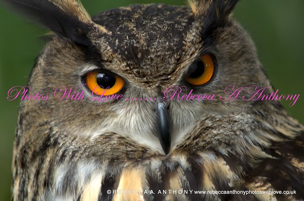 Birds of Prey ~ 11th July 2015