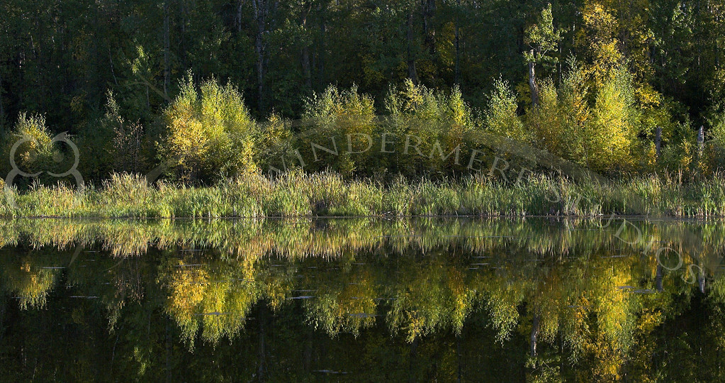 Elk Island Reflection