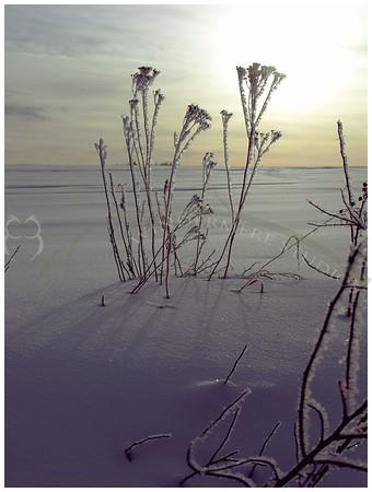 Feb. 9, 2005: Frosty Sunrise.