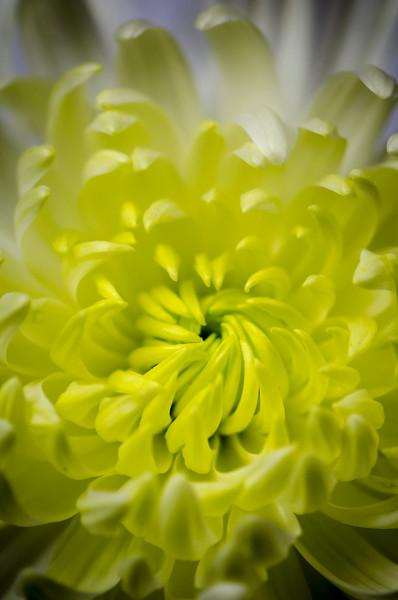 Bloom Macro
