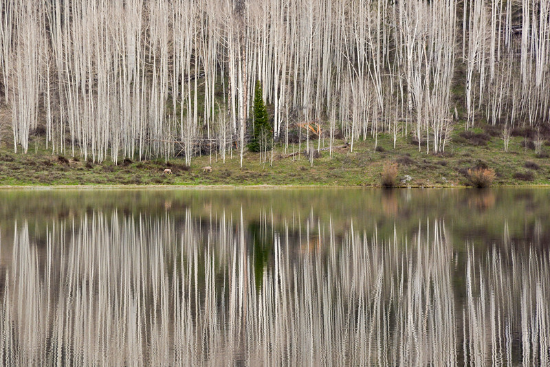 Aspen Reflections 2