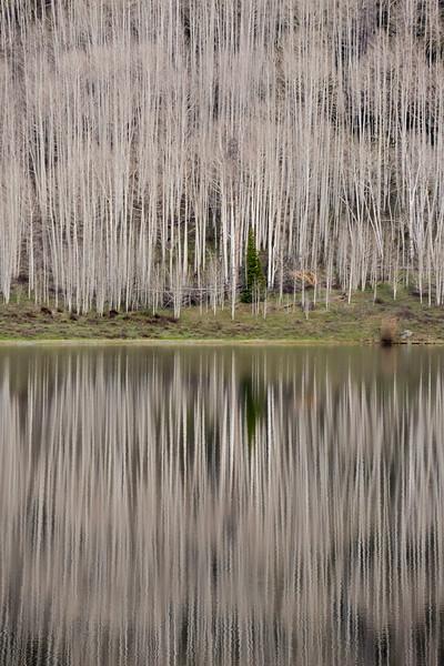 Aspen Reflections 1