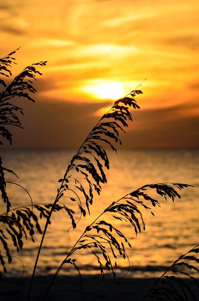 Gulf Sunset 847