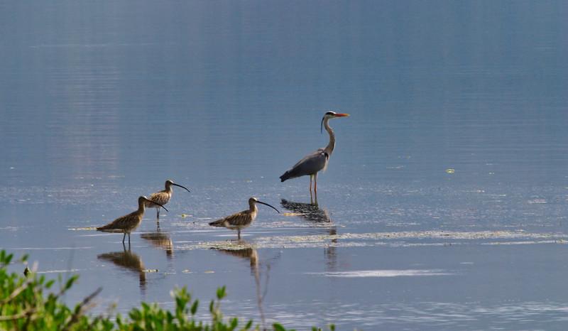 Άρτα (Κόπραινα, Λιμνοθάλασσα Αγρίλου)