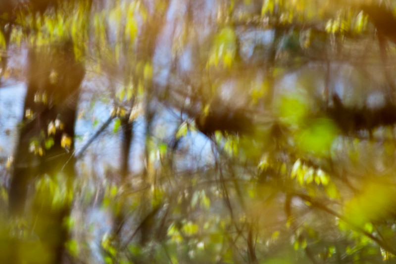 Spring in abstract.  Shot w/the legacy OM 135mm f2.8