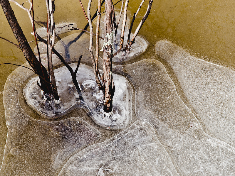 More small trees in a frozen pond.  I just love the light and the patterns.