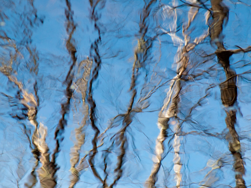 dead trees reflected in a forest pond.  I just loved the way the wind made them dance.  Shot w/the legacy OM 123mm f2.8